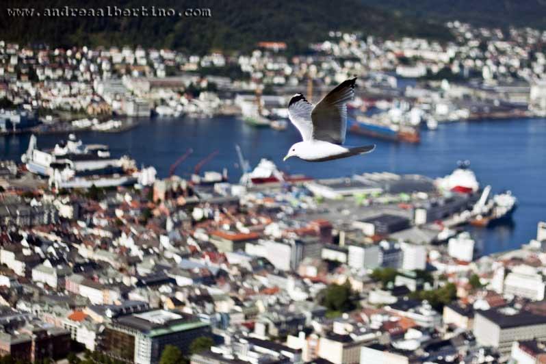 Seagull over Bergen