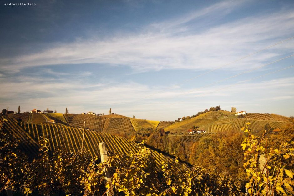 Styria-Landscape, Vineyards